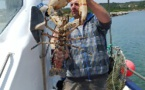Prise du 18 mai 2015 Philippe Botti patron pêcheur à Bonifacio 6kg hum le top