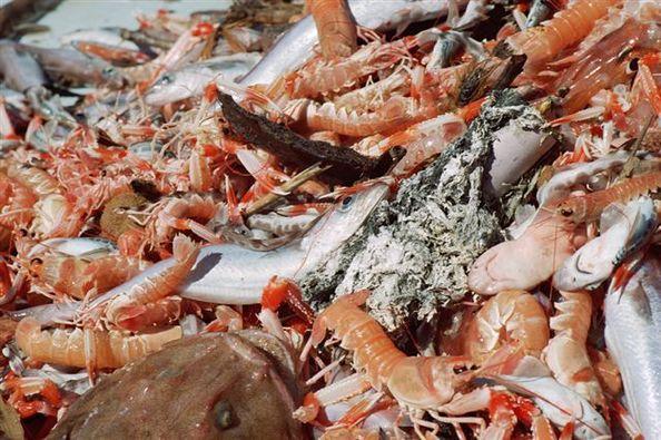 Schéma Régional de Développement et d'Equipements des ports de Pêche en Corse