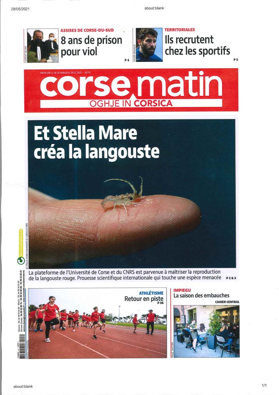 Langouste Stella Mare
