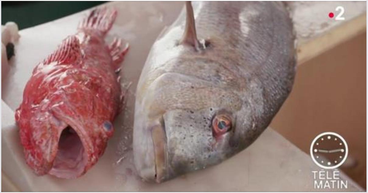 La pêche en Corse - Projet Moonfish