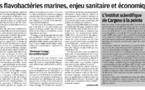 Les flavobactéries marines : Enjeu économique et sanitaire.