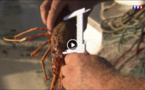reportage - fermeture de la pêche à la langouste à Bonifacio, Santa Manza