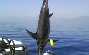 Pêche aux pélagiques avec Sébastien Rialland