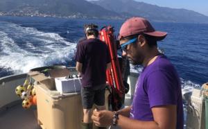 Le projet GENETREC en Corse
